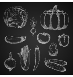 Autumn farm vegetables chalk sketches vector