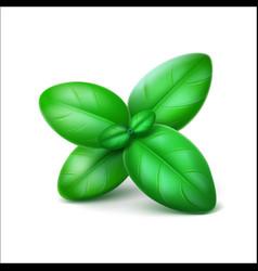 Green fresh basil leaves on white background vector