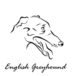 English greyhound vector