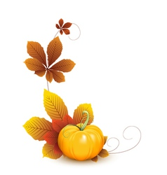 Pumpkin and leaves vector