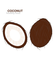 coconut fruit vector image