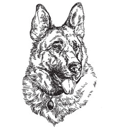 german shepherd hand drawing vector image vector image