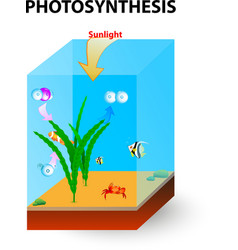 Photosynthesis cross section vector image