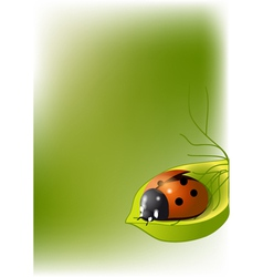 Background with ladybug vector