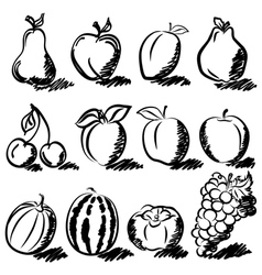Temperate fruits sketch drawing vector