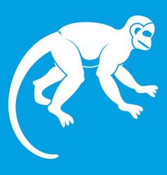 Capuchin monkey icon white vector