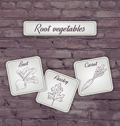 Flashcard with root vegetables beet carrot and vector