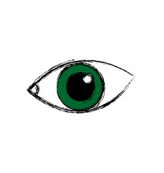 Eye human optical look watch icon vector