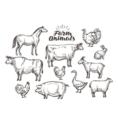 Farm sketch Collection animals such as vector image vector image
