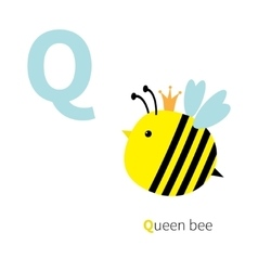 Letter Q Queen bee Zoo alphabet English abc with vector image