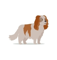 Cocker spaniel dog breed flat design vector