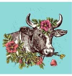 Head of cow cow vector