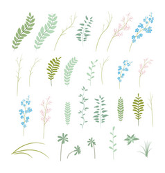 set of plants flowers and herbs vector image