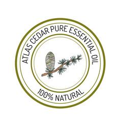 Atlas cedar essential oil label aromatic plant vector