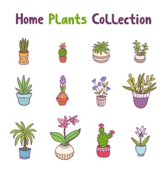 Home plants collection vector