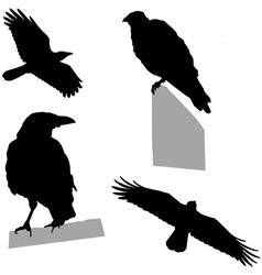 Flying sitting crow vector