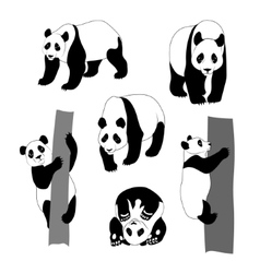 Set of graphic panda vector