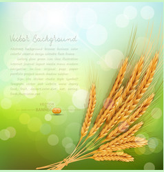 Background with gold ears of wheat and sun rays vector