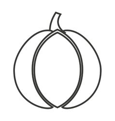 Garlic vegetable isolated icon vector