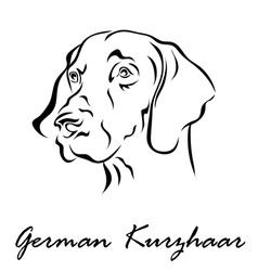 German Kurzhaar vector image vector image