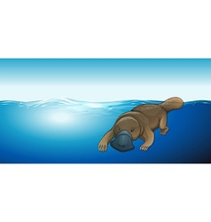Platypus swimming in the sea vector
