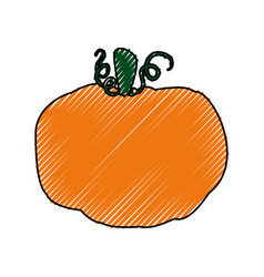 Fresh pumpkin vegetable vector