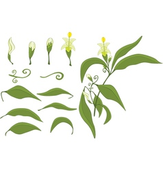 Set of Green Leaves and Flowers vector image vector image
