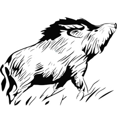 wild pig vector image
