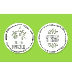 Ayurvedic herb - product label with coleus vector