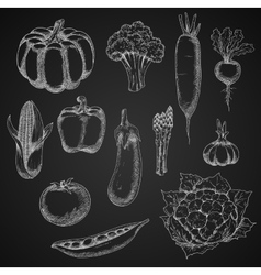 Chalk sketches of fresh vegetables vector