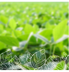 hand drawn soy on blurred background vector image