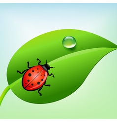 Ladybug on a green leaf vector