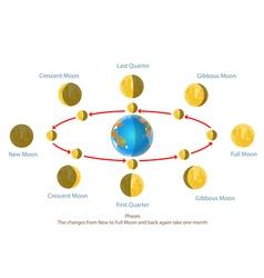 Change new moon vector image