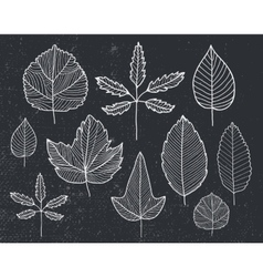 set of hand drawn tree leaves - white on vector image vector image