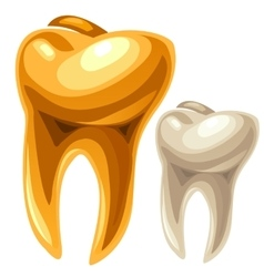 Gold and white human tooth vector image vector image