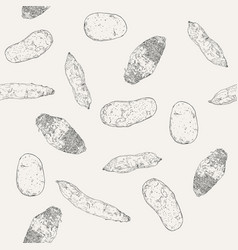 Hand drawn sketch taro sweet potatoes and potato vector