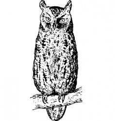 owl otus vector image vector image