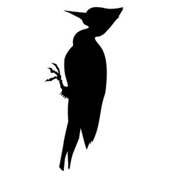 Woodpecker vector