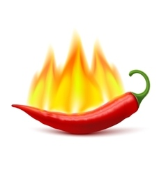 Flaming hot chili pepper pod image vector