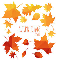 autumn foliage vector image