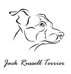 Jack russell terrier vector