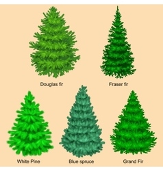 Set of christmas tree like fir or pine blue vector