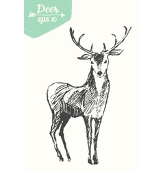 Sketch deer vintage hand drawn vector