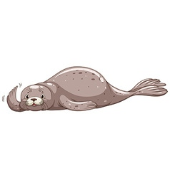 Seal with gray skin waving vector
