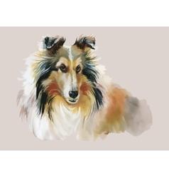 Collie animal dog watercolor vector