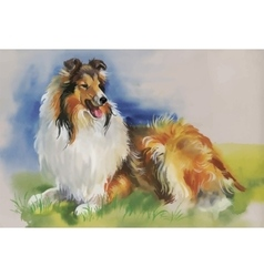 Collie animal dog watercolor vector