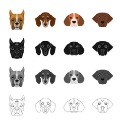 Bernard breed suit and other web icon in vector
