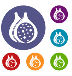 fig fruit icons set vector image vector image