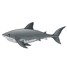 Wild shark on white background vector image vector image