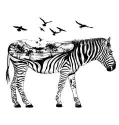 Hand drawn zebra for your design wildlife concept vector